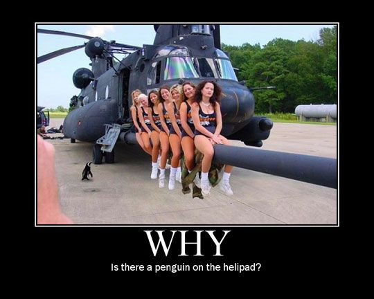 Google Image Result for http://static.themetapicture.com/media/funny-penguin-helicopter-girls.jpg