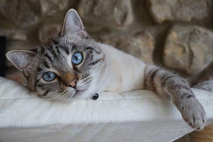 Those blue eyes #yummmypets #cat