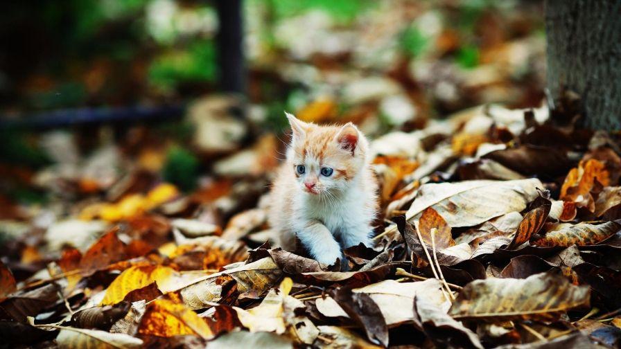 Foliage Kitten Autumn Hd Wallpapers Download Cat Wallpaper Kitten Cats And Kittens