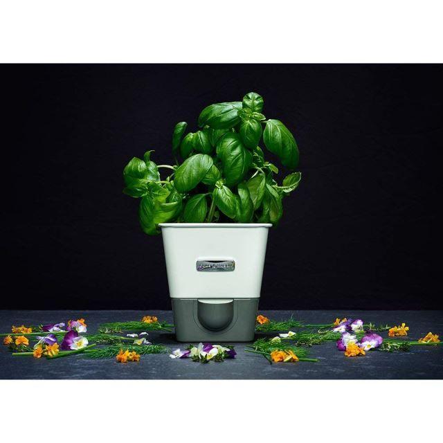32 Ways To Create The Best Indoor Herb Garden Herbs 400 x 300