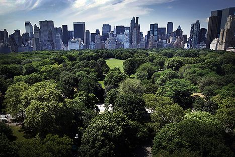 A City's Best Defense Against Climate Change? Its Trees, Wetlands, and Watersheds