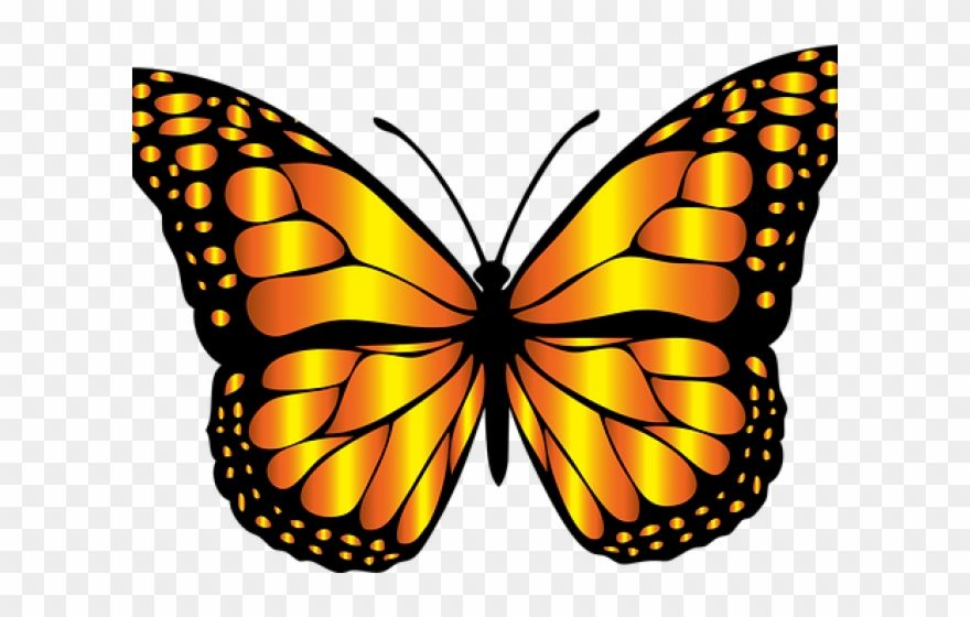 Download Hd Monarch Butterfly Clipart Png Full Hd Butterfly Insect Clipart Transparent Png And Use Butterfly Clip Art Butterfly Art Drawing Butterfly Images