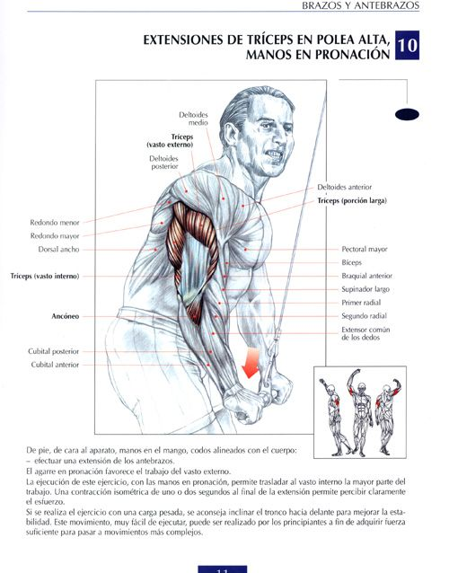 ejercicios de antebrazo gym