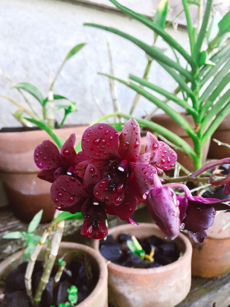 How to take care of an Orchid Pretty plants, Different