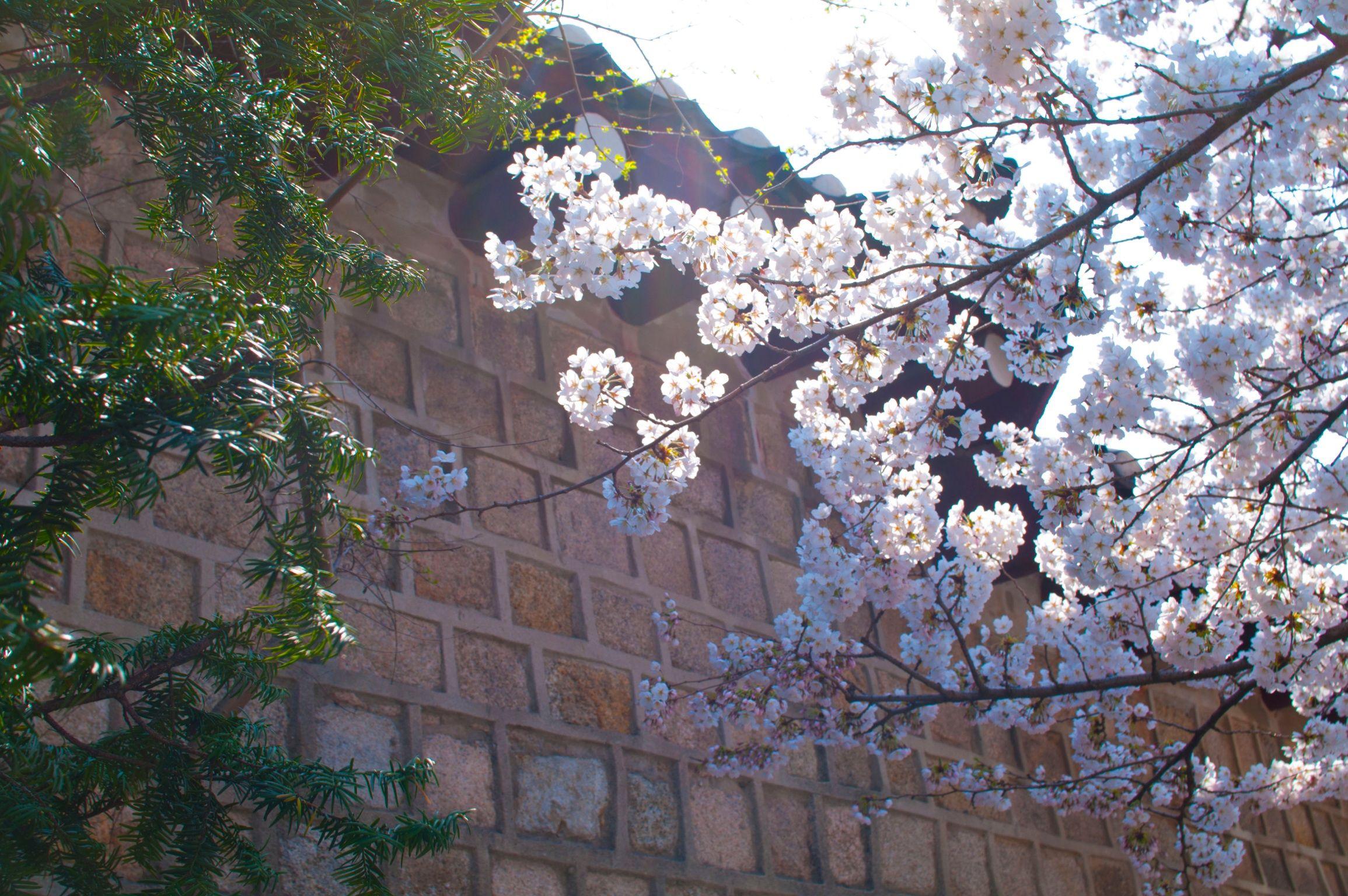 어느 봄날