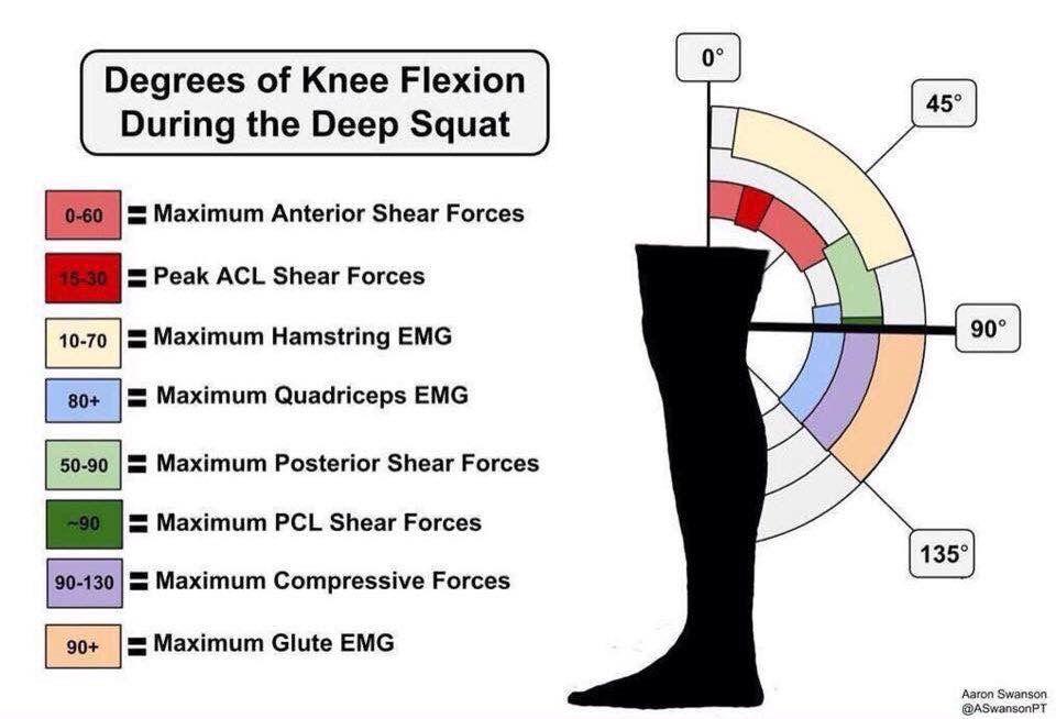 Degrees of Knee Flexion During a Deep Squat Deep squat