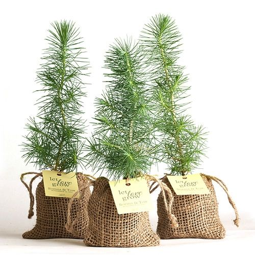 Pine Tree Plant Favor Burlap Pouch Marry Me Pinterest