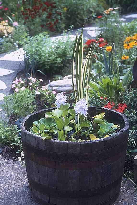 Jardin d\'eau facile!! | Jardin | Pinterest | Eaux, Jardins et Le ...