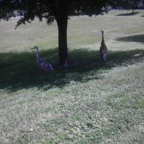 Floridian Crane