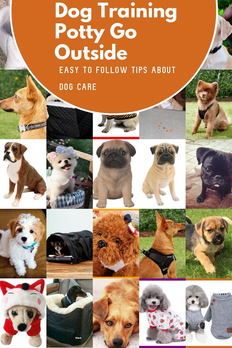 Dog Training Potty Go Outside Advice You Ought Not Skip Over Be Sure To Check Out This Helpful Article In 2020 Dog Potty Training Dog Training Basic Dog Training