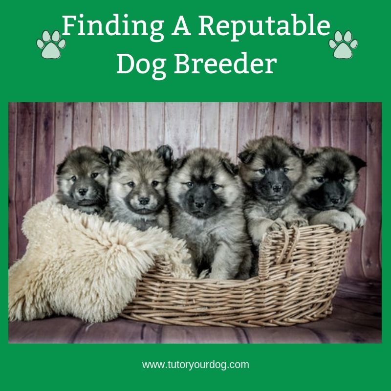 Follow Our Finding A Reputable Dog Breeder Board To Learn Tips And