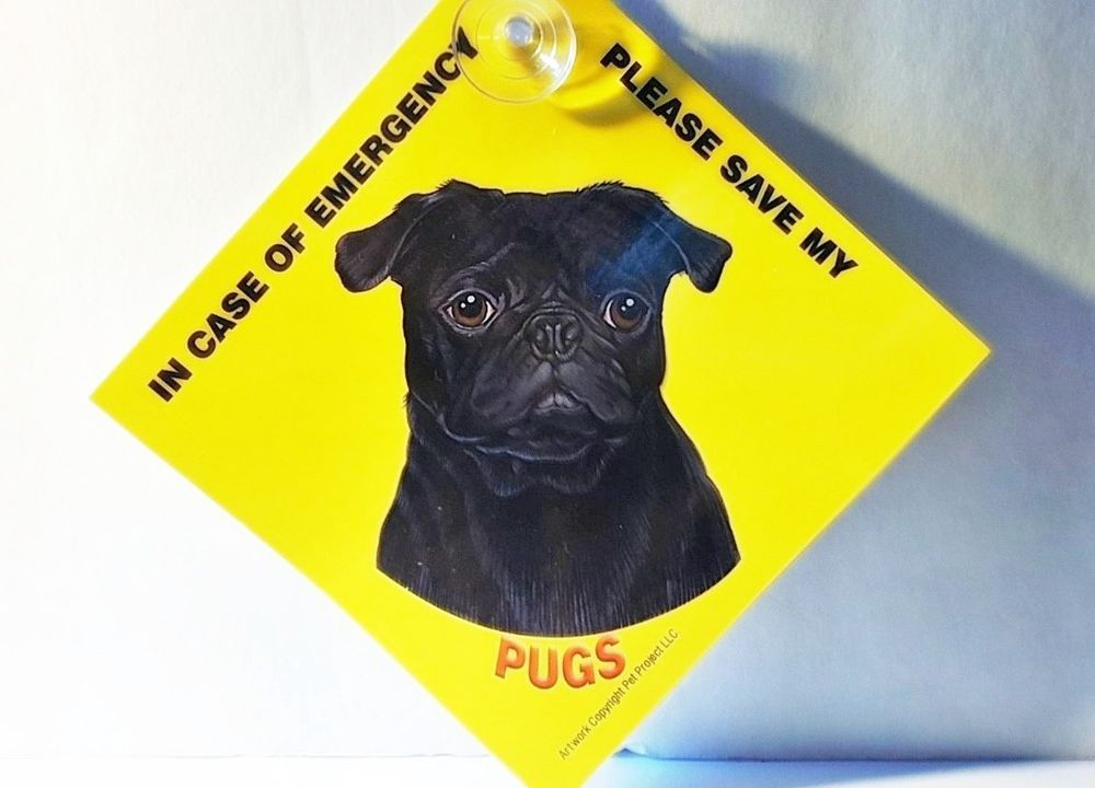 Love your Dog ??  This is a must have in case of emergency