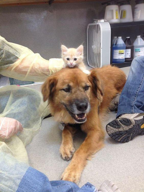 boots the kitten nanny arizona humane society (1) Dogs