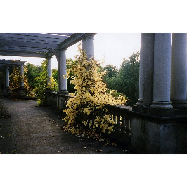 columns, vine