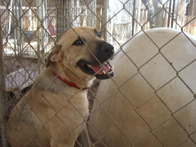 Adopt Prince Romeo On Animales Defensa