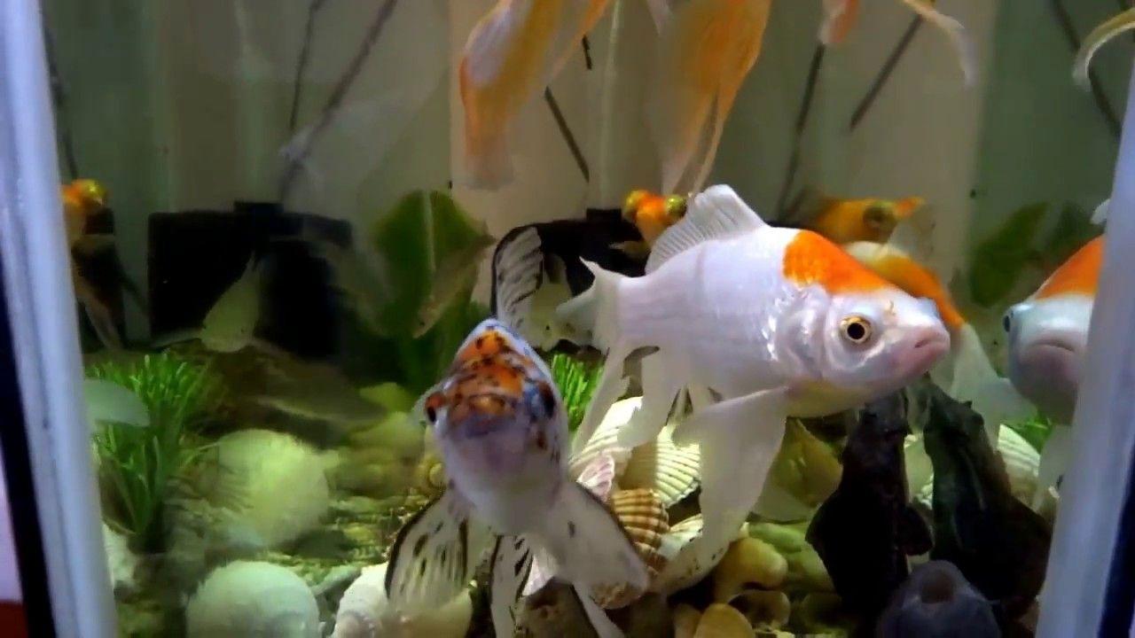 Fish Tank Wallpaper Hd For Desktop Full Scrfish Tank Aquariums If