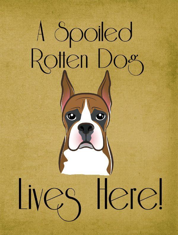 Boston Terrier Spoiled Dog Lives Here Flag Garden Size