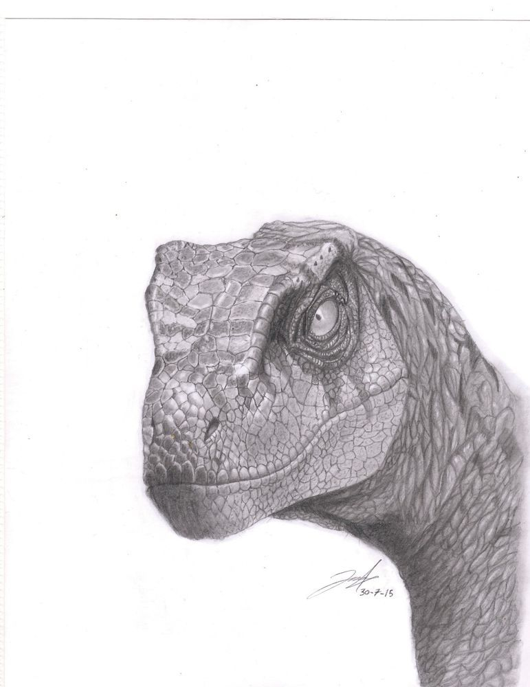 velociraptor sketch drawing hand 1/7 jurassic park. from $39.0 ...