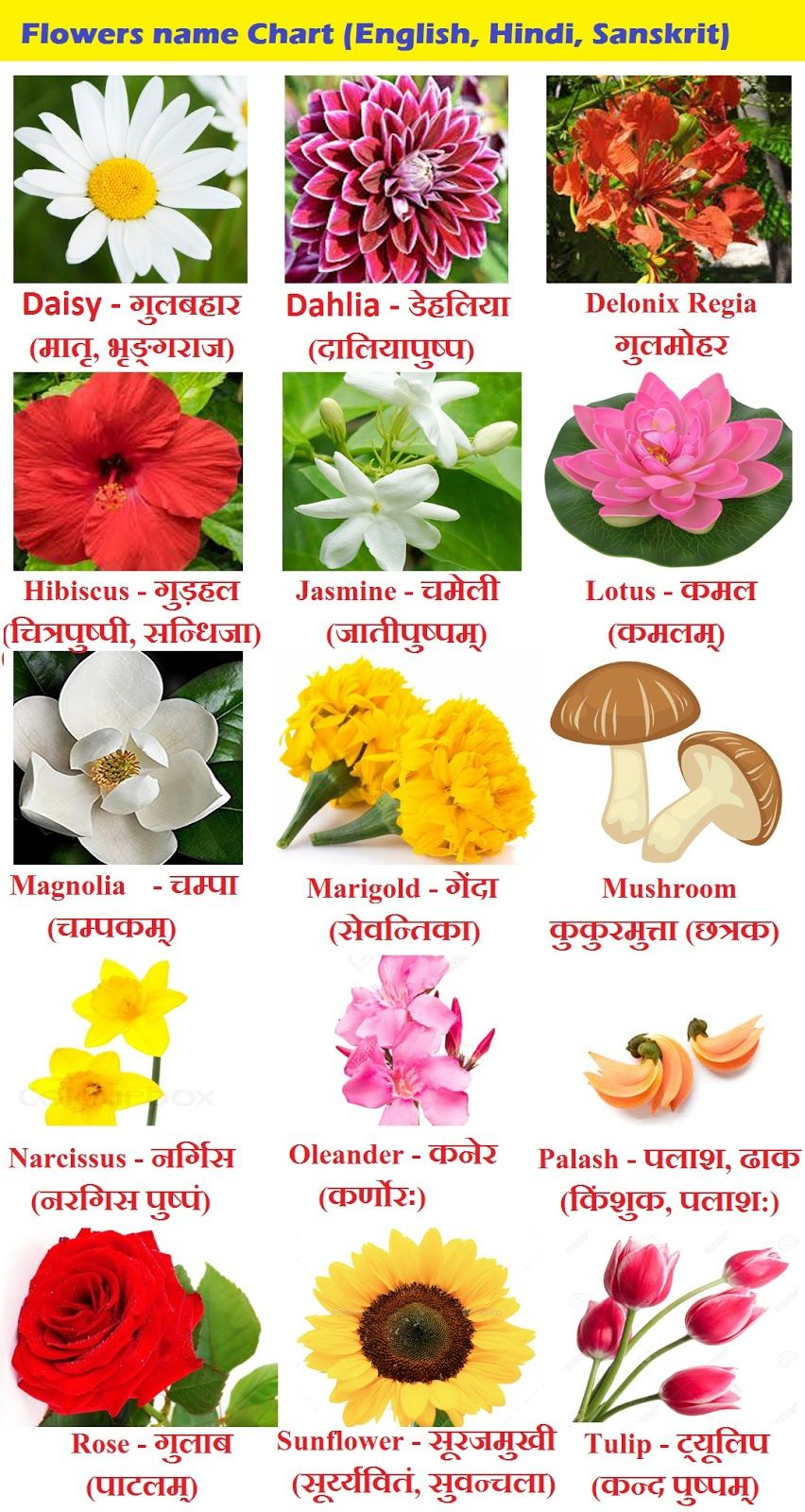 The Best Flowers Name In Sanskrit With Picture And Description In 2020 Indian Flower Names Flowers Name In Hindi Flower Names
