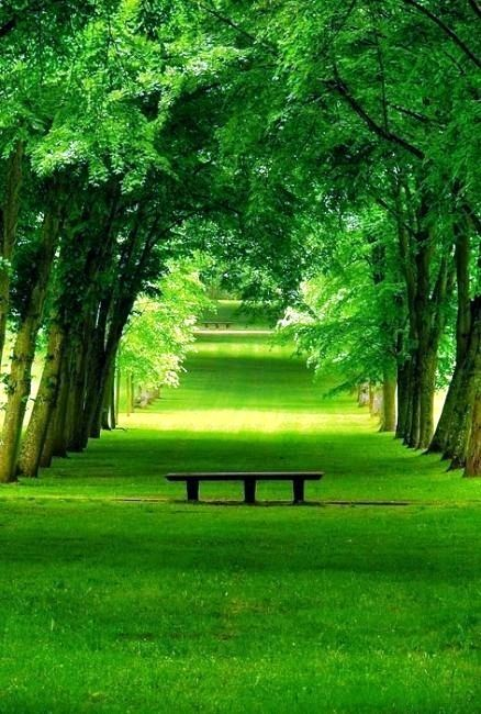 Beautiful green nature are
