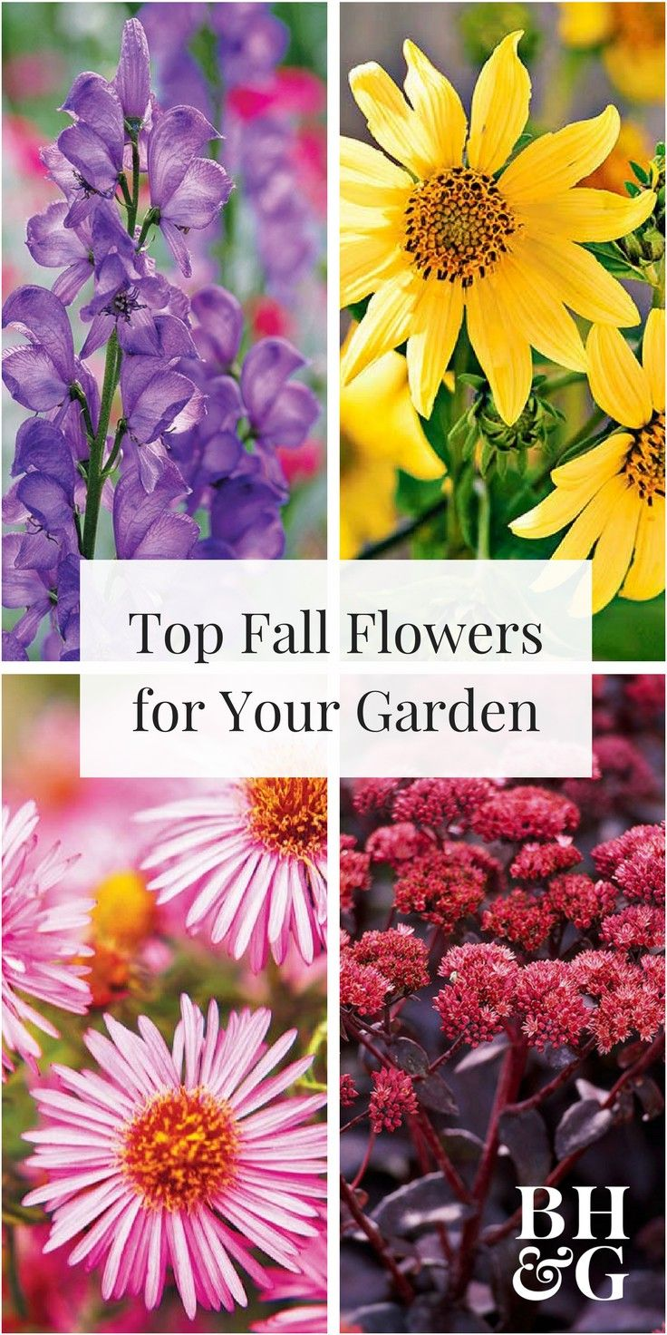 Top Fall Blooming Flowers For Your Garden Perennial Garden Plans