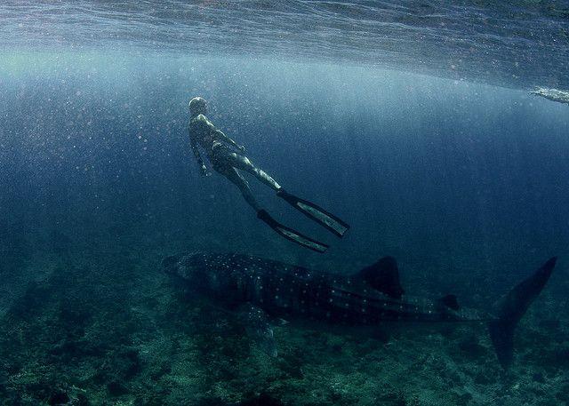 Tanya Streeter freediver