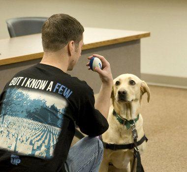 Cornelius Nonprofit Pave Trains Service Dogs To Be Battle Buddies