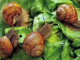 http://www.fugadalbenessere.it/coltivare-lumache-attivita-agricola-di-nicchia/
