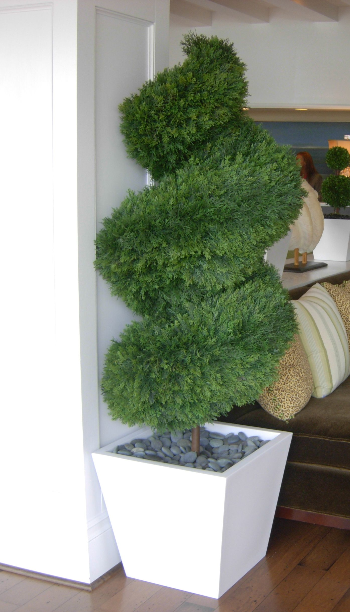 Double Spiral Juniper Topiary designed and created by