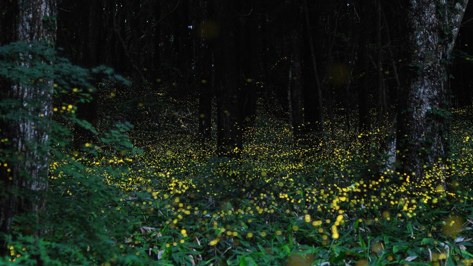 always make me think of Beau - the night he died, my backyard filled with millions of fire-flies - and it wasn't even the time of year for them.  AMAZING!!!