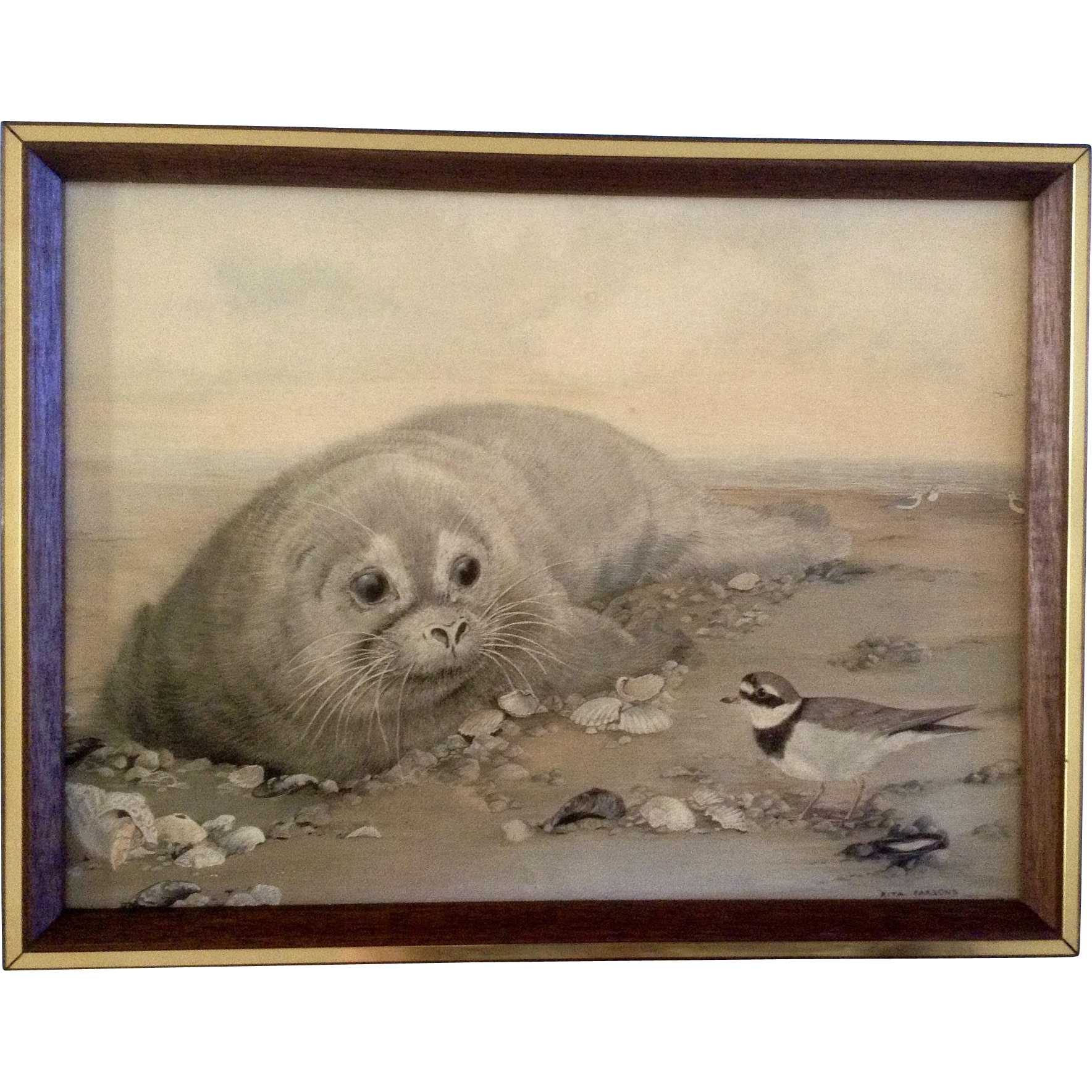 "1926 Vintage ANIMALS /""SEAL/"" GORGEOUS COLOR Art Print Plate Lithograph"