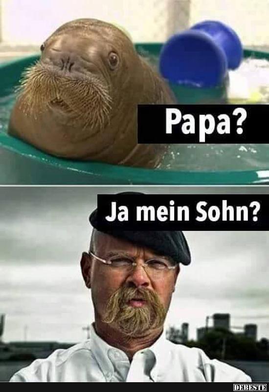 Papa? | Lustige Bilder, Sprüche, Witze, echt lustig #cuteanimalhumor