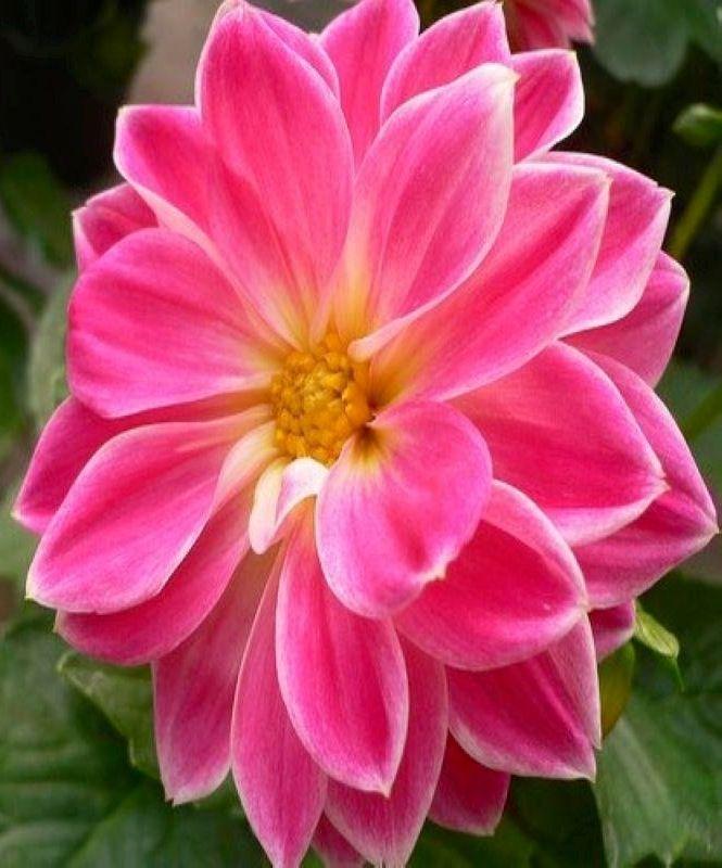 https://sites.google.com/site/dacsanmientrungdng/ liked Flower