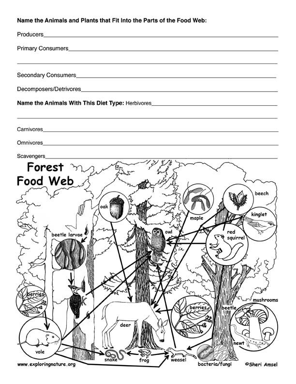 Printables Food Web Worksheet High School exploring nature and student centered resources on pinterest deciduous forest food web activity
