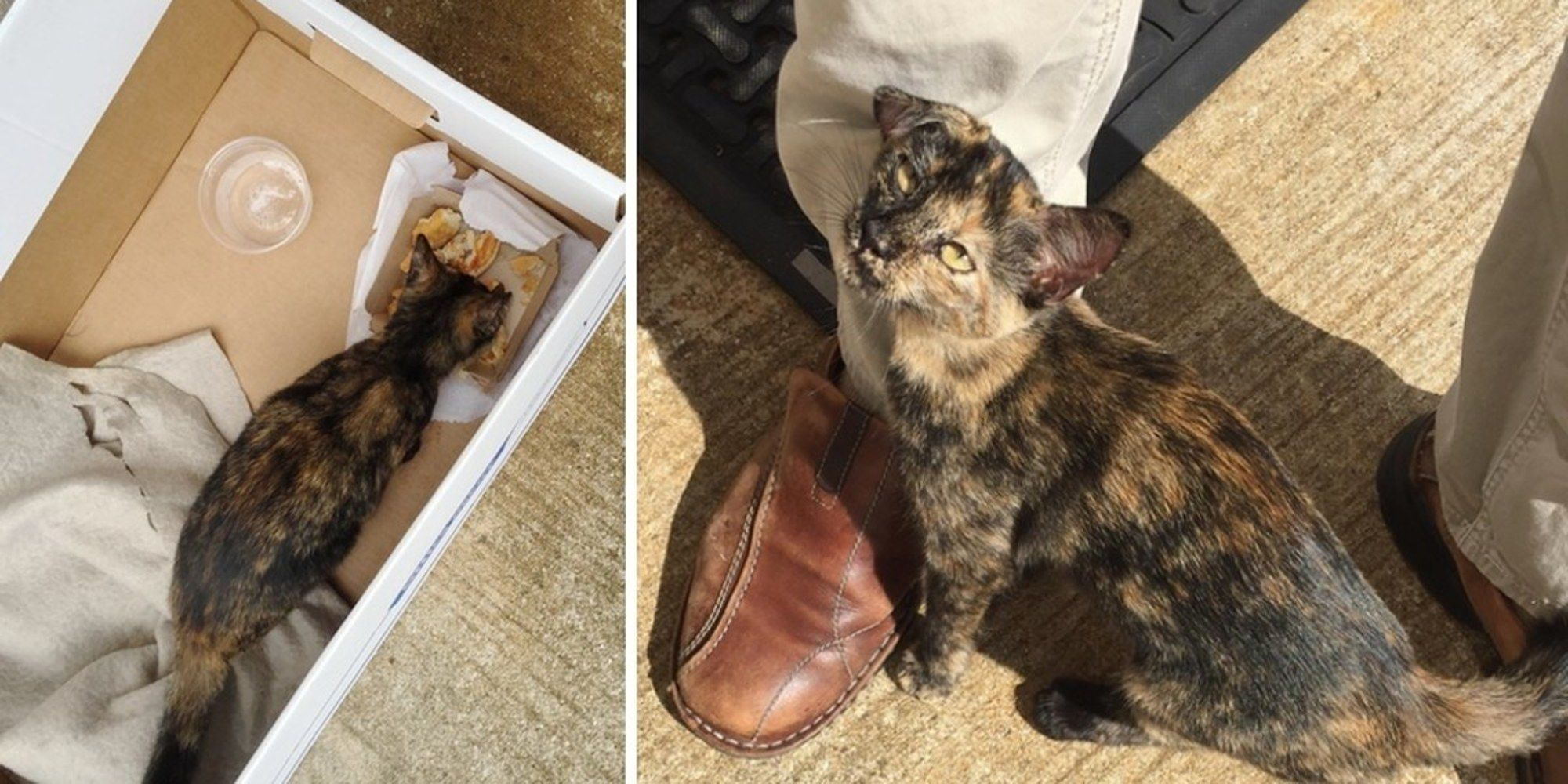 A Scrawny Tortie Kitten Was Wandering Outside A Factory In Houston When A Man Found Her Trying To Eat Some Tortie Kitten Cute Animal Pictures Cats And Kittens