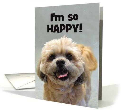 Happy Shih Tzu Happy Birthday Card