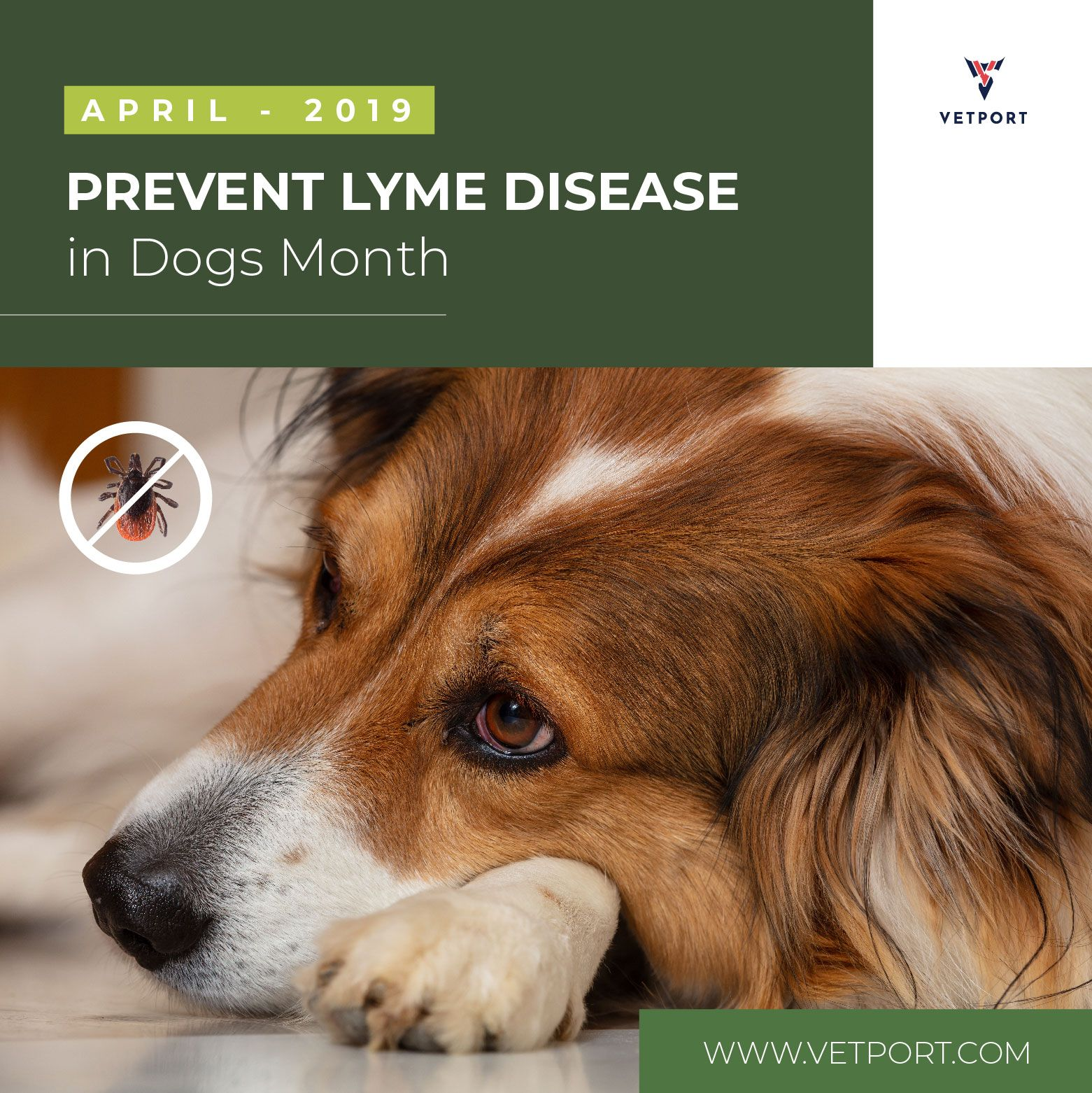 Prevent Lyme Disease In Dogs Month April 2019 Fridayfeeling