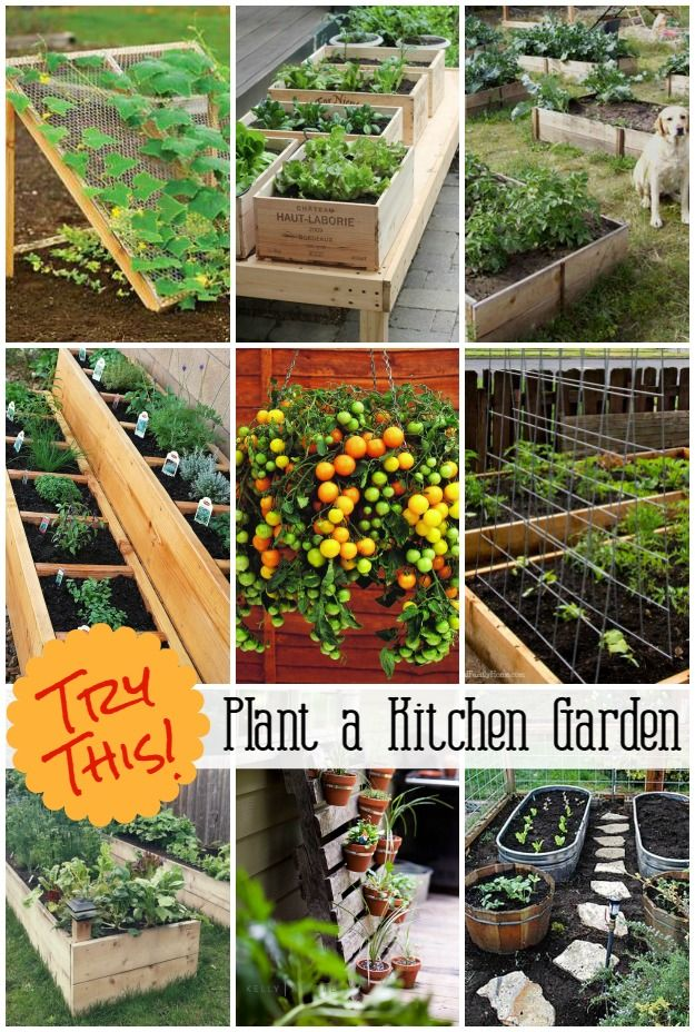 Grow a Vegetable Garden in containers #shadecontainergardenideas