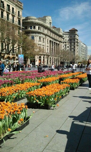 Today in Barcelona.  Flowers from the Netherlands