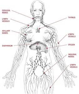 Lymphatic System Diagram Labeled Images Pictures Becuo Lymphatic System Lymphedema Holistic Health Herbalist