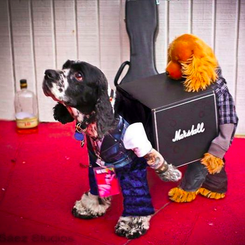 2 dogs carrying a load together.... #dog #halloween....cleaver, creative costume.