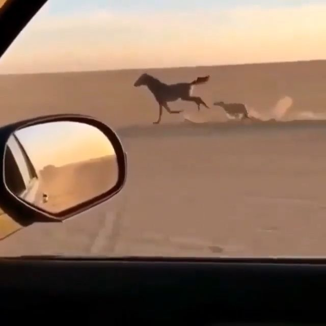 Race Between Horse & Dog