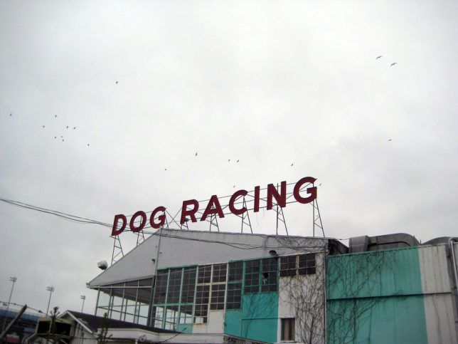 Countries That Have Greyhound Racing