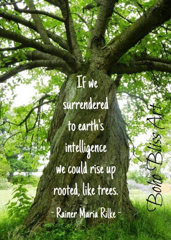 If we surrendered to earth's intelligence we could rise up rooted