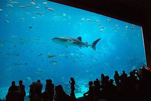 Visit The Georgia Aquarium The Largest Aquarium In The World