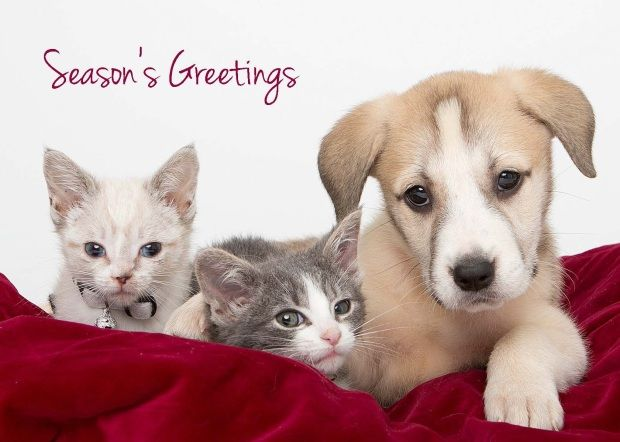 Michigan Humane Holiday Greeting Cards Help Make Homeless Animals Wishes Come True Animals Pet Holiday Animal Photo