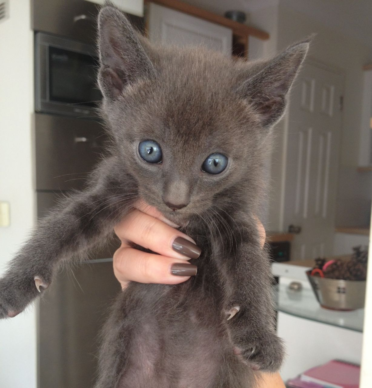 Looking for Siamese kitten names? Choosing a name for a