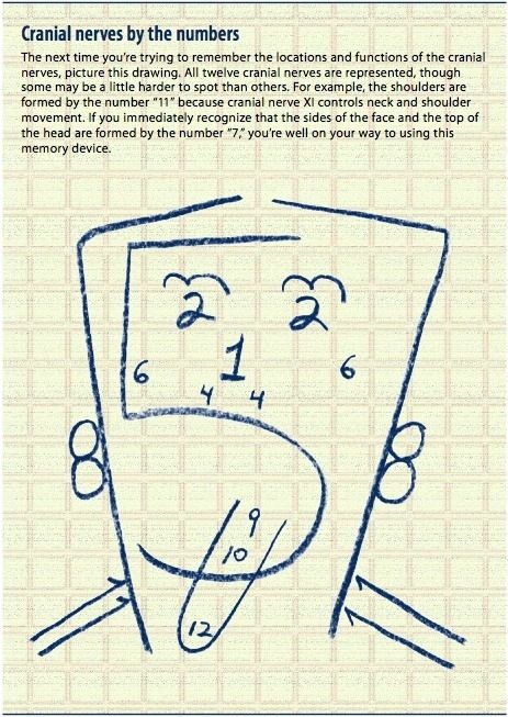 How to remember the twelve cranial nerves. This will be so helpful ...