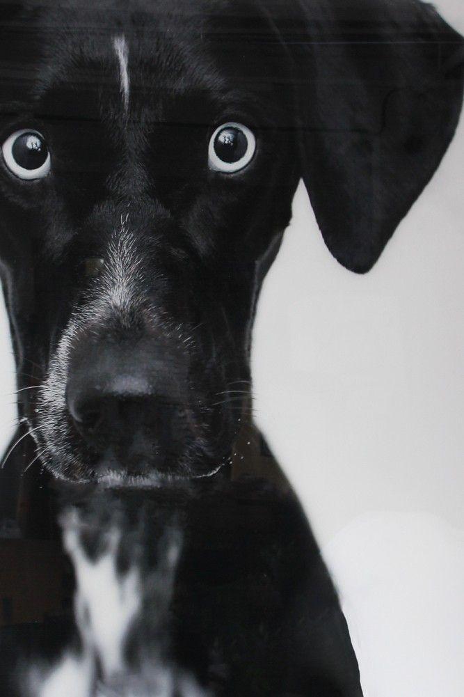 Dazed Dog Art Print - View All - NEW