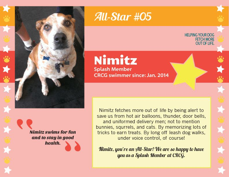 Meet Nimitz, CRCG Club FETCH All Star! Nimitz fetches more out of life by being alert to save us from hot air balloons, thunder, door bells, and uniformed deliver men; not to mention bunnies, squirrels, and cats!